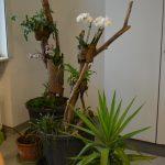 Regenwald im Blumentopf