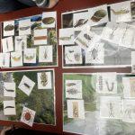 Workshop zum Thema Gewässergüte